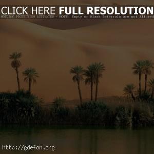 Пустыня, песок, пальмы, вода