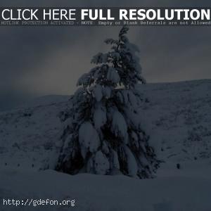 Елка, зима, снег