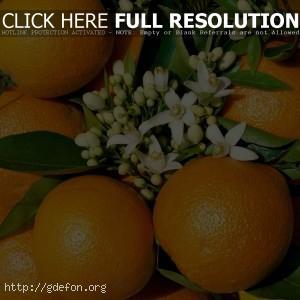 Апельсин, цветы, фрукт