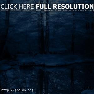 Зима, деревья, снег,  холод