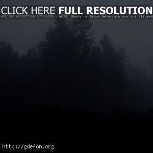 Лес, деревья, туман, мрак