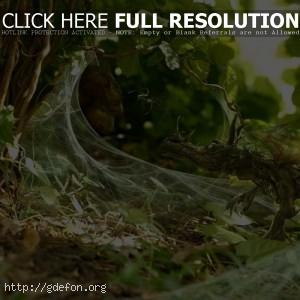 Растение, паутина, маскировка