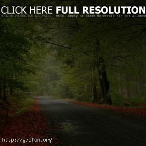Лес, дорога, осень