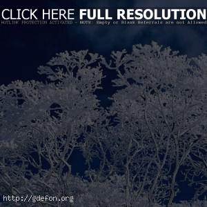Зима, дерево, небо