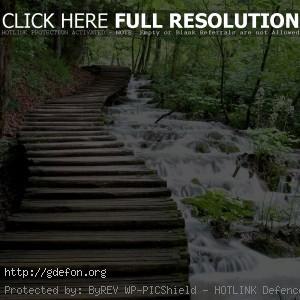 лес, ручей, поток, каскад, дорожка