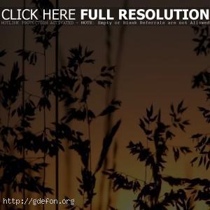 Трава, закат