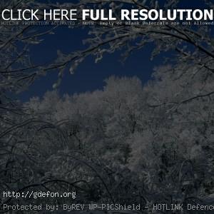 Зима, лес, снег, ветви