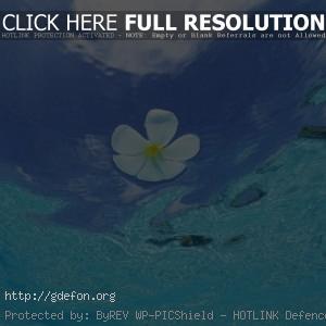 Мальдивы, цветок, вода