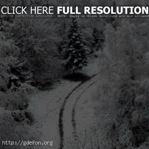 Зима, дорога, снег, деревья