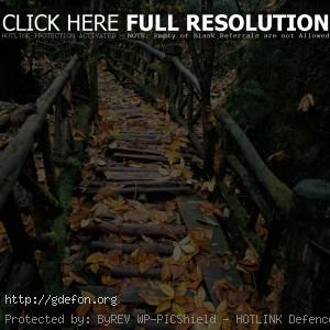 Перила, мох, осень