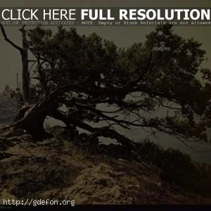 Дерево, скала, утес
