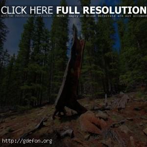 Пейзаж, лес, дерево