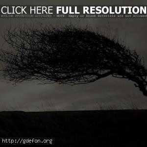 Изогнутое дерево