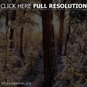 Зима, лес, снег, деревья, ели, солнце, лучи