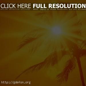 Пальма, солнце, жара