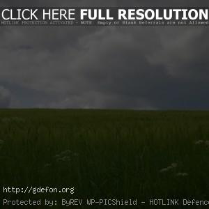Поле, трава, небо