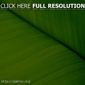Растение, зелень, лист, макро