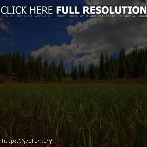 Лес, поле, трава, небо