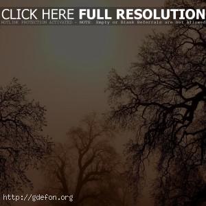 Деревья, ветки, солнце