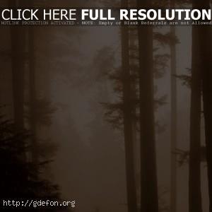 Туман, сепия, лес