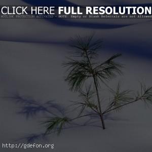 Елочка в снегу