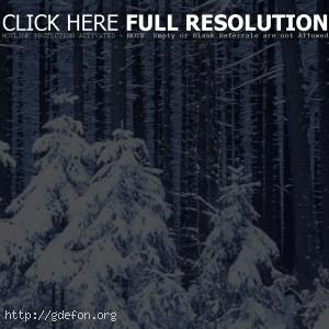Новый год, лес, снег, зима