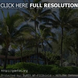 Пальмы, дом, пляж, лето