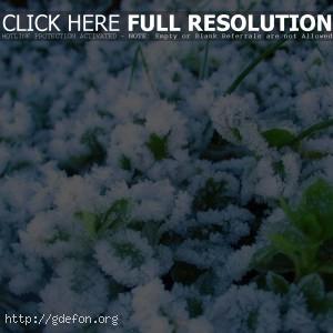 Зима, иней, растения