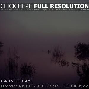 Трава, туман, озеро, отражение