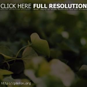 Листья, трава, макро