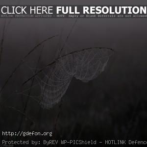 Паутина, роса, туман