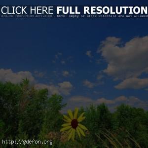 Небо, ромашка, зелень