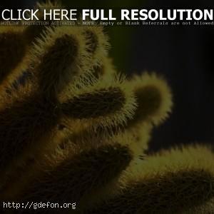 Иголки, кактус, растение