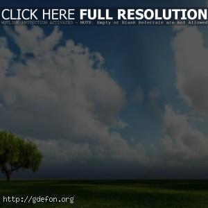 Одинокое зеленое дерево в поле — скачать