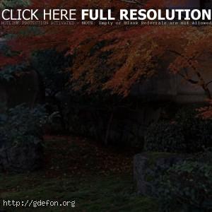 Япония, сад, осень