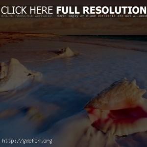 Раковины, море, берег, пляж
