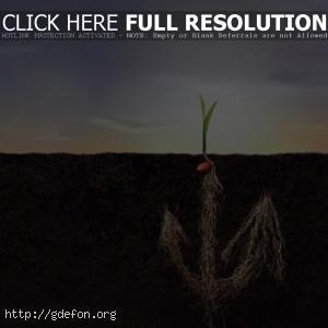 Корень, росток, земля, жизнь