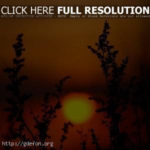 Закат, солнце, растения