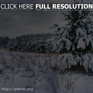 Снег, зима, елка, лес