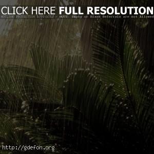 Дождь в джунглях