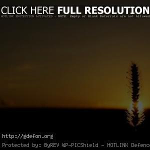 Колос, солнце, закат