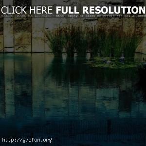 Пруд, трава, вода, стена