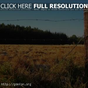 Забор, поле, лес