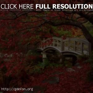 Япония, сад, мост, осень