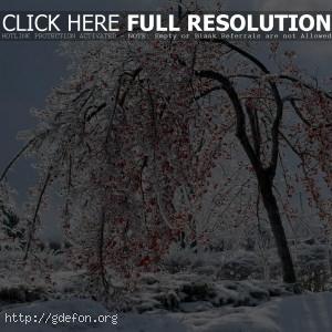 Ягоды на снегу