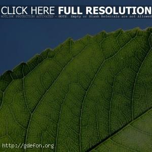Зеленый лист на солнце