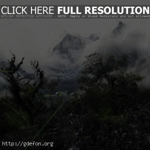Деревья, горы, туман