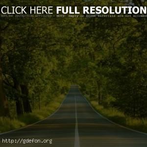 Дорога в зелёном лесу
