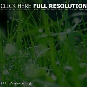 Трава, капли, роса