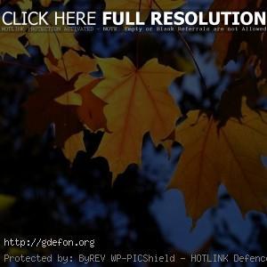 Листья, ветки, деревья, осень